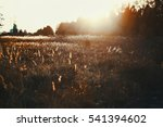 russian field. shallow depth of ... | Shutterstock . vector #541394602