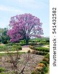 arlington cemetery in virginia. ... | Shutterstock . vector #541432582