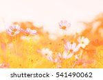 soft focus cosmos flower on... | Shutterstock . vector #541490062