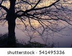 """ tree lively  morning fog "" of ... 