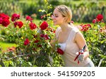 Stock photo portrait of excited young female gardener caring blossoming bush roses in yard 541509205