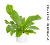Front View Of House Plant   A...
