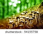 group of mushrooms in the forest | Shutterstock . vector #54155758