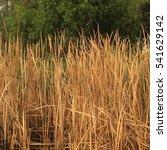 yellow dry grass field | Shutterstock . vector #541629142