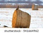 Hay Bales On A Winter Field