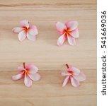 Pink Four Frangipani Isolated...