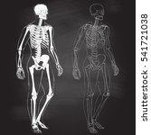 human body parts skeletal man... | Shutterstock .eps vector #541721038