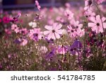 cosmos flowers background | Shutterstock . vector #541784785