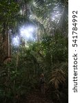 Small photo of Amazon Forest