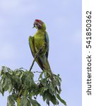 great green macaw perched on a... | Shutterstock . vector #541850362
