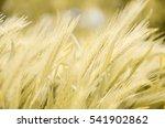 yellow spikes   Shutterstock . vector #541902862