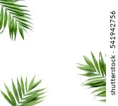 Small photo of green palm leaf branches on white background. flat lay, top view
