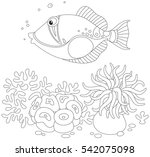 Trigger Fish Swimming Over An...