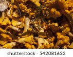 lots of cantharellus cibarius ... | Shutterstock . vector #542081632