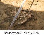 Ancient Burial  Bones  In The...