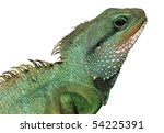 reptile animal lizard isolated... | Shutterstock . vector #54225391