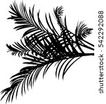 black palm leafs on white... | Shutterstock .eps vector #542292088
