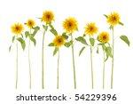 set of long stem  yellow...   Shutterstock . vector #54229396