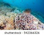 coral | Shutterstock . vector #542366326