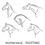 Stock vector breed of horse 54237682