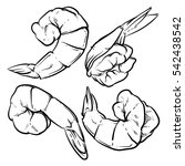 shrimp drawing on a white...   Shutterstock .eps vector #542438542