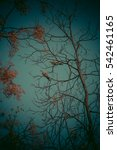birds on a tree | Shutterstock . vector #542461165