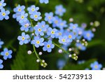 Meadow Plant Background  Blue...