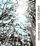 light through trees   vector... | Shutterstock .eps vector #54281845