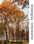 autumn in the city park | Shutterstock . vector #542826616