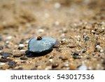 Beetle Ladybug Crawling On A...