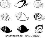Shells. Element  For Design...
