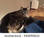 Big Cat In Tromso