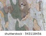 sycamore bark background. close ... | Shutterstock . vector #543118456