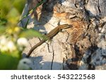 lizard taking a sun bath | Shutterstock . vector #543222568