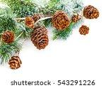 christmas tree branch | Shutterstock . vector #543291226