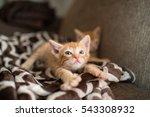 Stock photo orange kitten stretching 543308932
