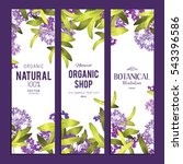 plants and herbs banners set | Shutterstock .eps vector #543396586