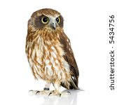Stock photo new zealand owl in front of a white background 5434756