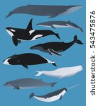 whales and dolphins graphic...
