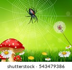 Cartoon Spider With Nature...