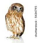 Stock photo new zealand owl in front of a white background 5434795