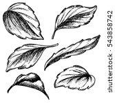 sketch ink graphic leaves set... | Shutterstock . vector #543858742