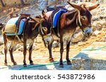 Donkey Taxis  Rhodes  Greece