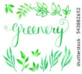 floral design set with green... | Shutterstock . vector #543882652