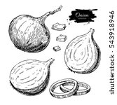 onion hand drawn vector set.... | Shutterstock .eps vector #543918946