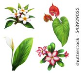 Tropical Flowers And Shrubs Se...