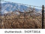 closeup of dry weedy shrub... | Shutterstock . vector #543973816