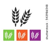 wheat  millet  barley  rye ... | Shutterstock .eps vector #543986548