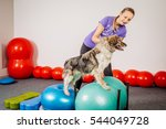 Stock photo dog training in the fitness club 544049728