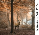 stunning image of red deer stag ... | Shutterstock . vector #544150906